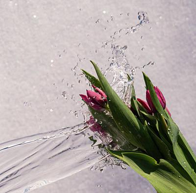 Photograph - Tulip Flowers With Water Splash by Tamara Sushko