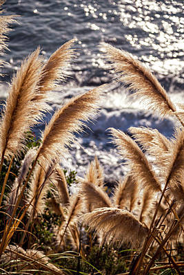 Photograph - Golden Pampas II by Mercedes Noriega