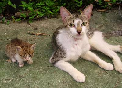 Kitten And Mother Cat Print by Trudy Brodkin Storace
