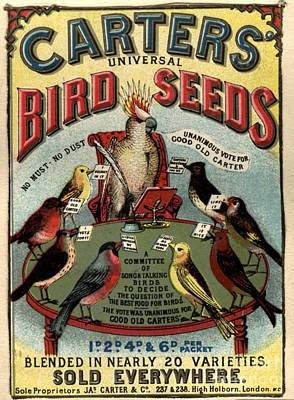 1890s Uk Carters Bird Seed Birds Art Print by The Advertising Archives