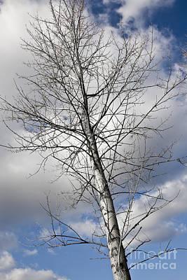 Modern Feathers Art -  A Beautiful Tree Against A Blue Sky by Dan Radi