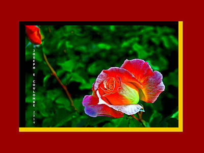 A Blended Rose Art Print by Joseph Coulombe