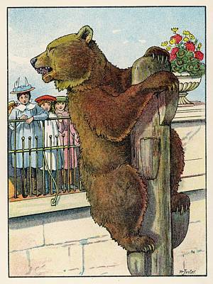 Brown Bear Drawing -  A Brown Bear Climbs To The Top by Mary Evans Picture Library