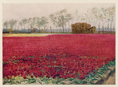 Tulip Drawing -  A Field Of Red Tulips, Holland by Mary Evans Picture Library