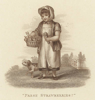 Strawberries Drawing -  A Girl Sells Fresh  Strawberries by Mary Evans Picture Library