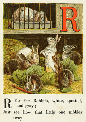 Cabbage Drawing -  A Group Of Captive Rabbits  Nibbling by Mary Evans Picture Library
