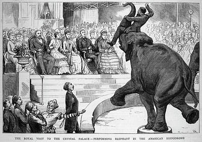 A Performing Elephant  Entertains Art Print by Mary Evans Picture Library