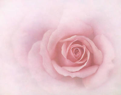 Photograph -  A Simple Rose by David and Carol Kelly
