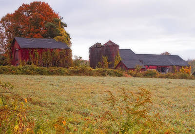 Bittersweet Photograph -  Abandoned Connecticut Farm  by John Vose