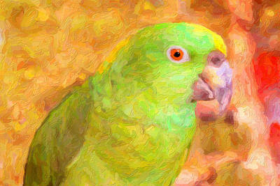 Amazon Parrot Art Print by Gravityx9 Designs