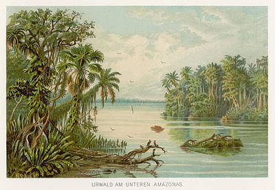 Vegetation Drawing -  Amazon River  With Lush Vegetation by Mary Evans Picture Library