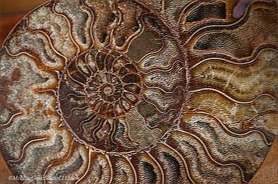 Photograph -  Ammonite Fossils by LeeAnn McLaneGoetz McLaneGoetzStudioLLCcom