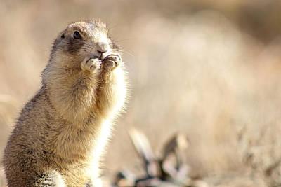 Pest Digital Art -  Arches National Park Ground Squirrel by Kait Thomas