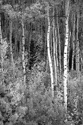 Photograph -  Aspen Autumn  by Eric Rundle