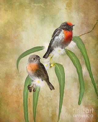 Small Digital Art -  Australian Scarlet Robin by Trudi Simmonds