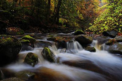 Photograph -  Autumn At Reelig Glen by  Gavin Macrae