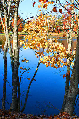 Autumn Trees On The Lake Art Print