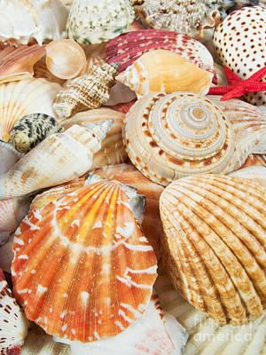 Conch Photograph -  Background Of Seashells by Jose Elias - Sofia Pereira
