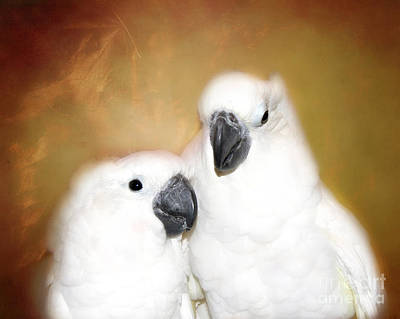 Photograph -  Best Friends Cockatoos  by Peggy Franz