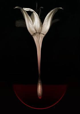 Manipulation Photograph -  Bleeding Lily by Johan Lilja