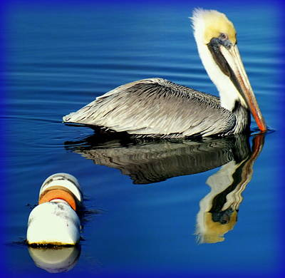 Birds Of A Feather Photograph -  Blues Pelican by Karen Wiles