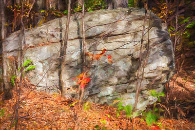 Photograph -  Boulder Red Leaves George W Childs National Park Painted  by Rich Franco