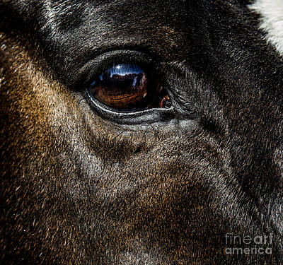 Bay Thoroughbred Horse Photograph -  Bright Eyes - Horse Portrait by Holly Martin