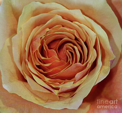 Rose Photograph -  By Any Other Name  by Maureen J Haldeman