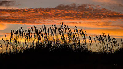 Photograph -  Cape Hatteras Sea Oats At Dawn. by John Pagliuca