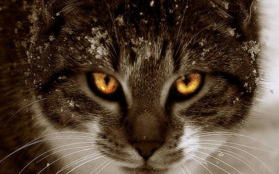 Cat Eyes Art Print by Yvonne Emerson AKA RavenSoul