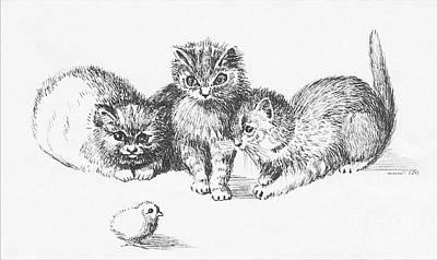 Digital Art -  Cats 421-08-13 Marucii by Marek Lutek
