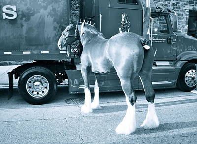 Photograph -  Clydesdale In Black And White by Alice Gipson