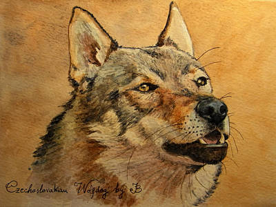 Watercolor Pet Portraits Painting -  Czechoslovakian Wolfdog Portrait by Juan  Bosco