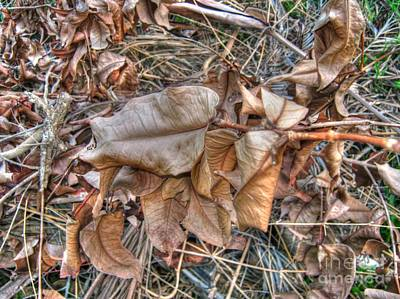 Dead Leaves Art Print by Michelle Meenawong
