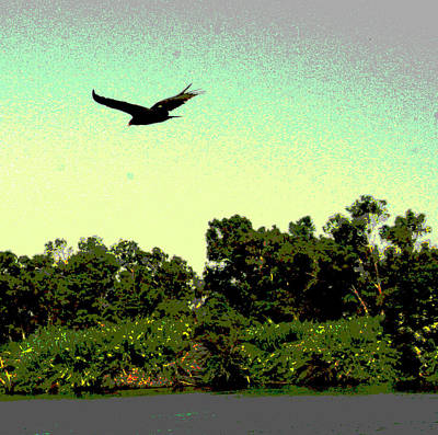Photograph -  Delta Wings by Joseph Coulombe