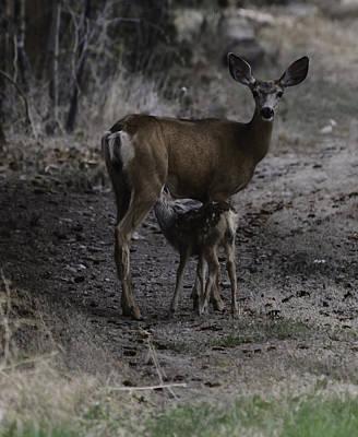 Photograph - Mother Deer by Rae Ann  M Garrett