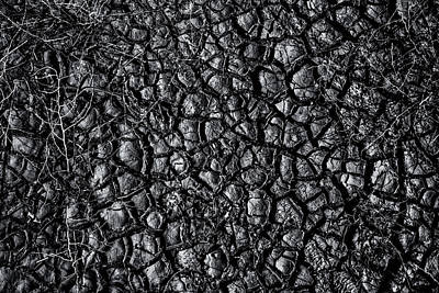 Photograph -  Drought by Mark Perelmuter