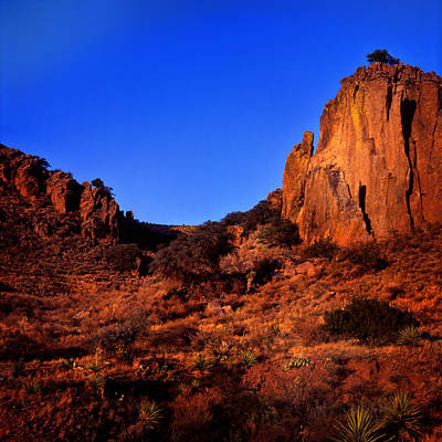 Photograph -  Early Morning On The Chihuahuan Desert by David and Carol Kelly