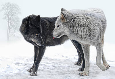 Wolves Photograph -  Ebony And Ivory  by Joachim G Pinkawa