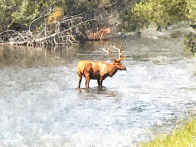Elk In The Water National Bison Range  Art Print by Larry Stolle