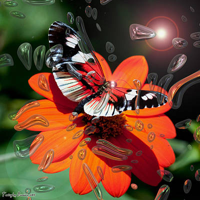 Enchanted Butterfly. The Seventh And Last.  2013  80/80 Cm.   Original