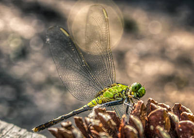 Print featuring the photograph  Erythemis Simplicicollis by Rob Sellers