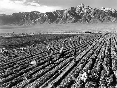 Harvesting Digital Art -  Farm Workers And Mount Williamson by Ansel Adams