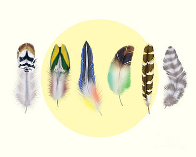 Abstract Wildlife Digital Art -  Feathers 2 by Mark Ashkenazi
