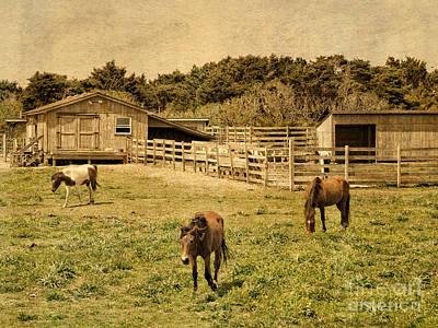 Photograph -  Feral Horses Of Ocracoke by Dawn Gari