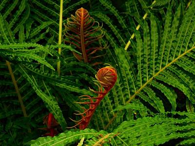 Cabin Wall Photograph -  Fiddlehead Fern Fronds by Movie Poster Prints