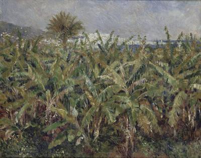 Field Of Banana Trees Renoir Painting - Field Of Banana Trees by Pierre-Auguste Renoir