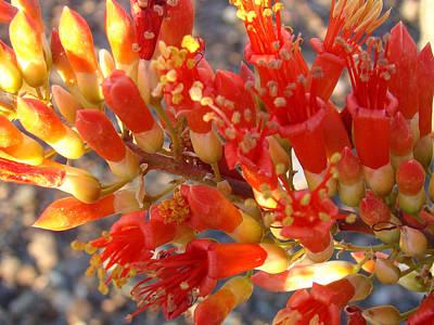 Crosswalk Mixed Media -  Fiery Orange Flower by Beverly Guilliams