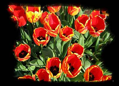 Digital Art -  Flamboyant Tulips by Will Borden