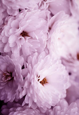 Pink Flowers Photograph -  Flowers by Modern Art Prints